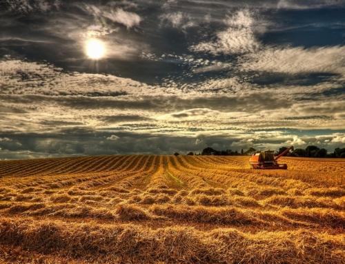 SLC arrenda 39 mil hectares na Bahia e Minas com Agrícola Xingu